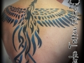 marko-tattoo-inked-phenix-tribal